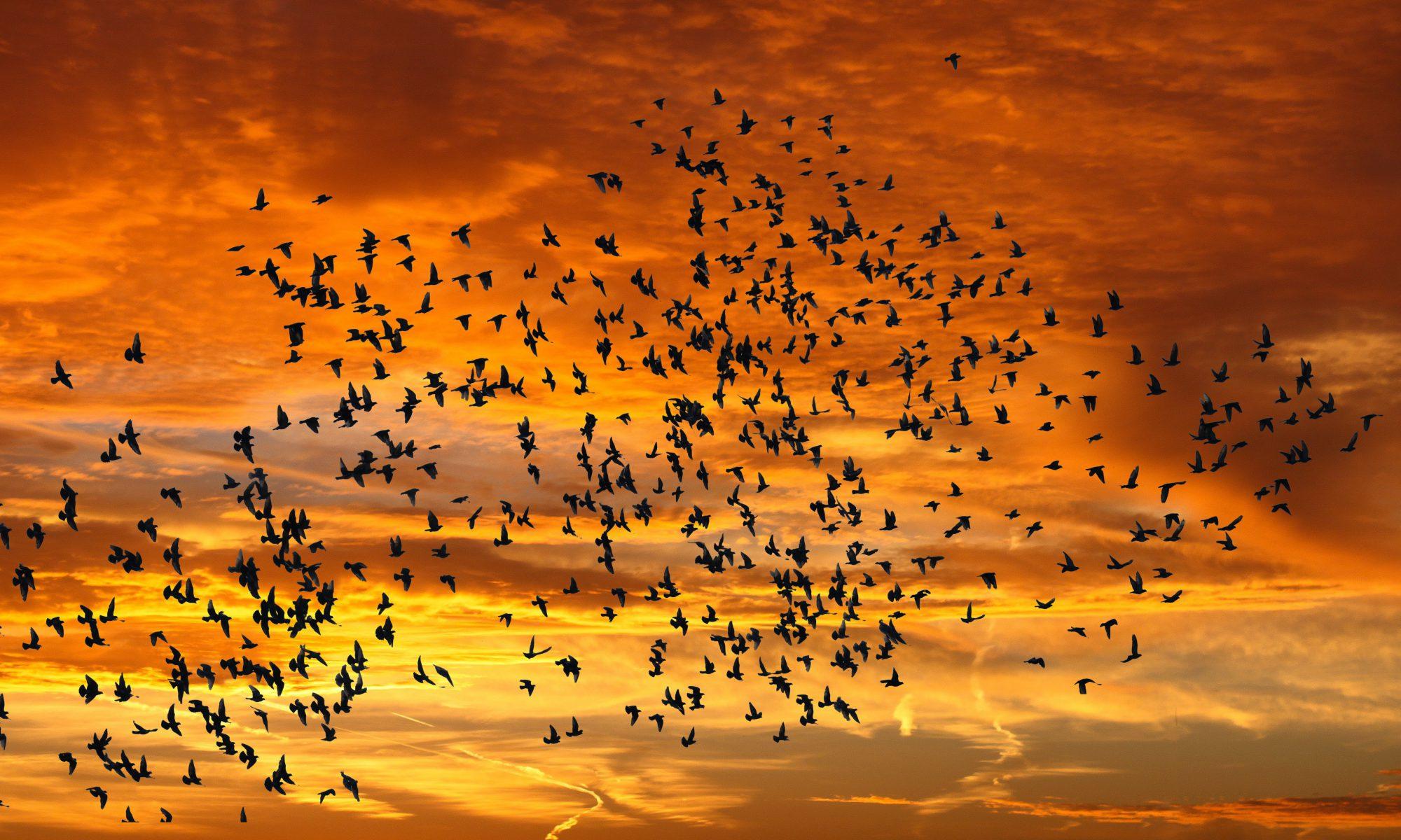 Flock Networks